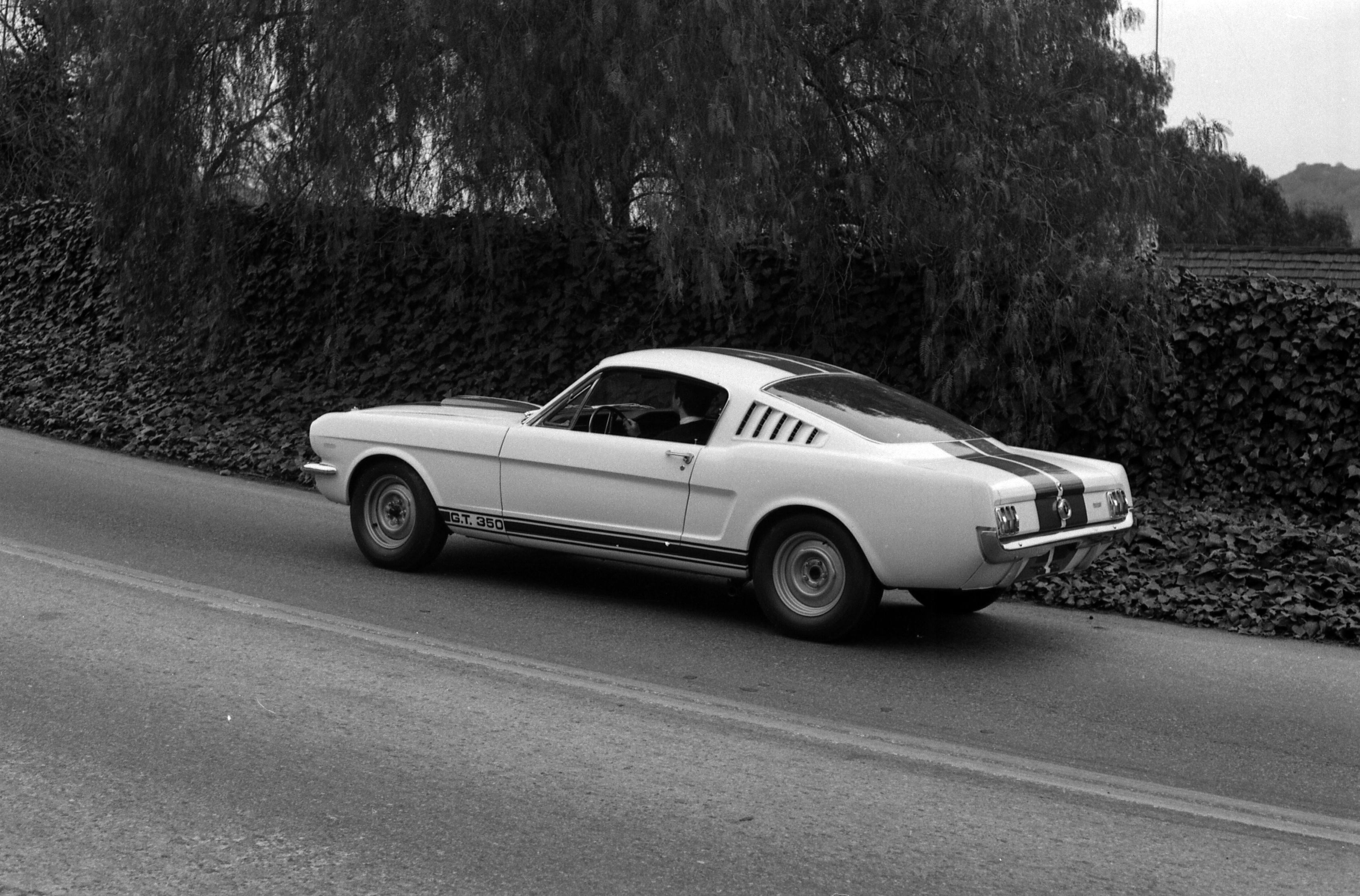 Original shelby gt350 mustang prototypes 1965 ford shelby gt350 mustang prototype 5s003 during advertising photoshoot showing stock steel wheels on